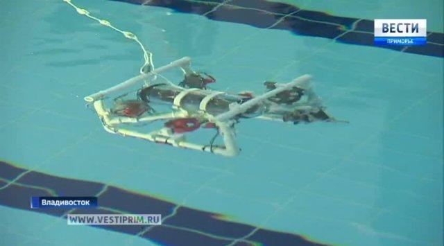 Robots competitions were held in Vladivostok
